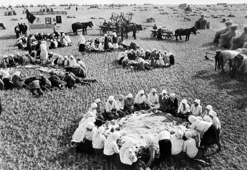 Обед во время сбора урожая