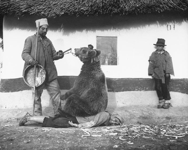 Использование медведей для лечения спины