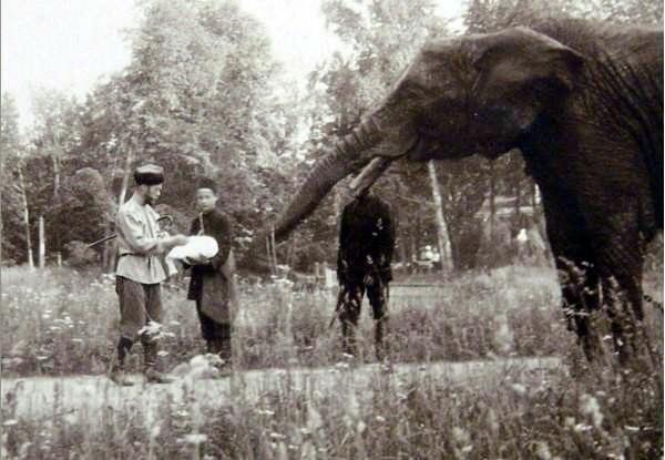 Николай II кормит слона в Царском селе