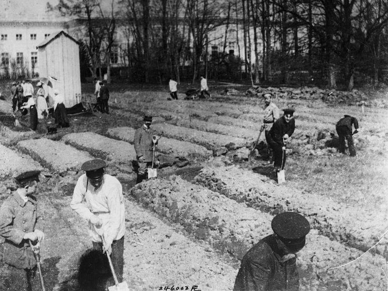Николай II с остальными Романовыми работают в саду в Царском Селе
