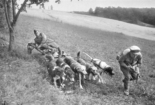 Вывоз раненых с поля боя