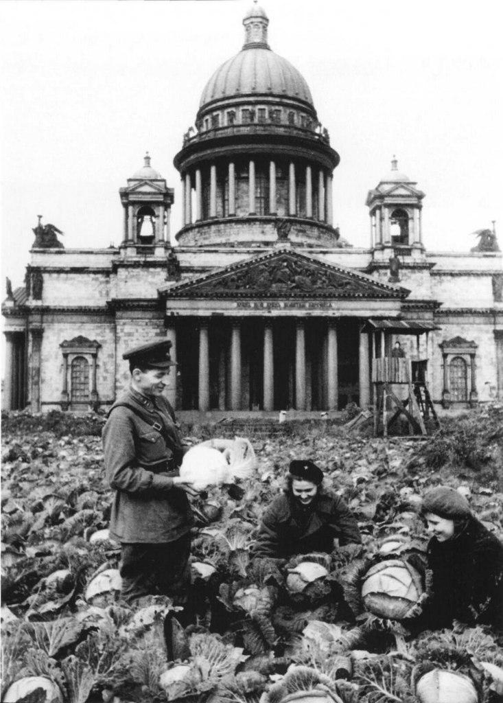 Сбор урожая капусты у Исаакиевского собора в Ленинграде