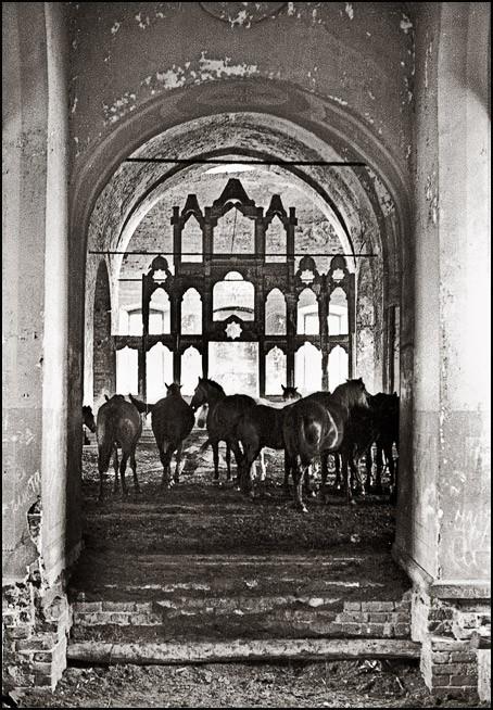 Кони в храме